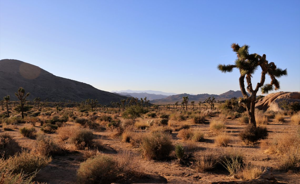 National parks near Los Angeles, Things to do in Joshua Tree | Roads and Destinations, roadsanddestinations.com