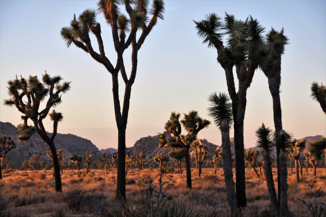Joshua Tree National Park - Roads and Destinations, roadsanddestinations.com