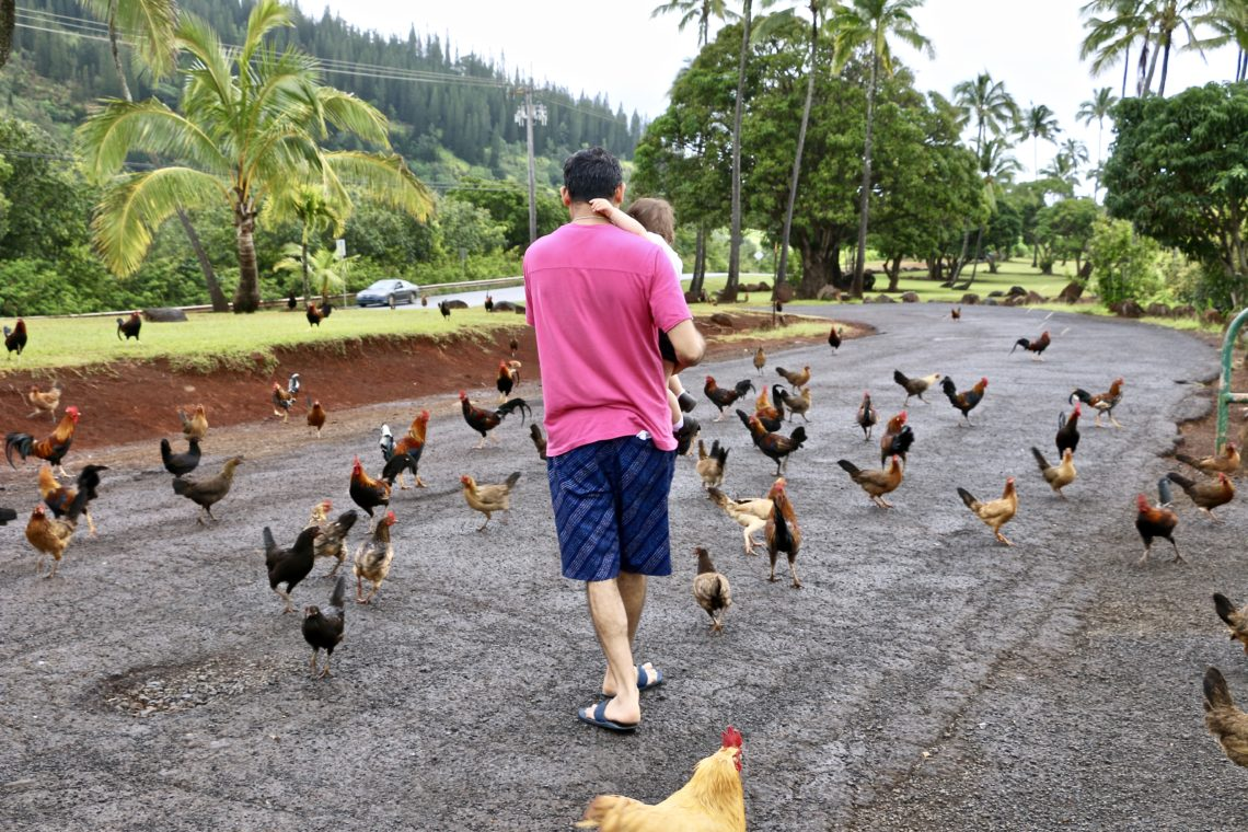 Things to know about Kauai | Roads and Destinations, roadsanddestinations.com