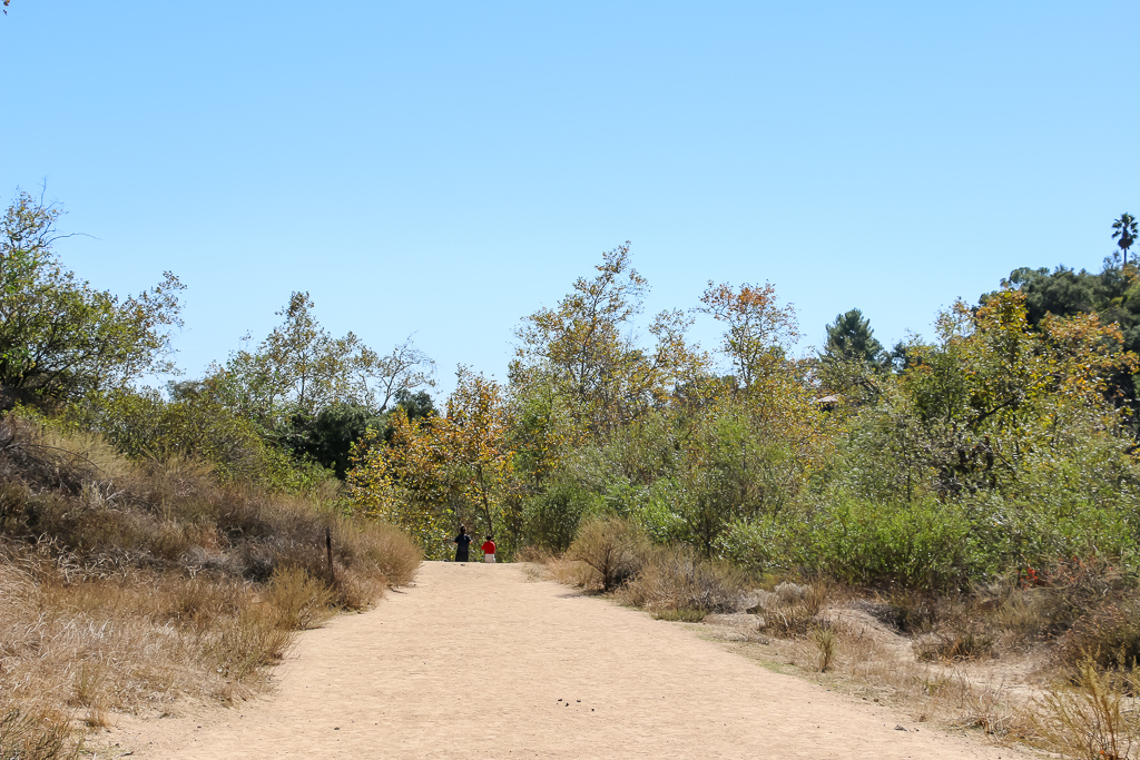 This part of the hiking to Eaton Canyon Fall is suitable for joggers, dog walker, and even visitors with strollers.