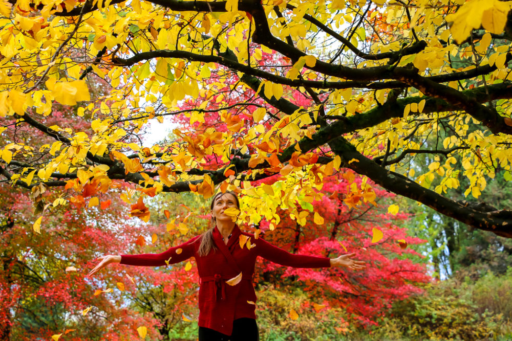 Glorious Fall Colors of Queen Elizabeth Park, Places not to miss in Vancouver, Canada - Roads and Destinations