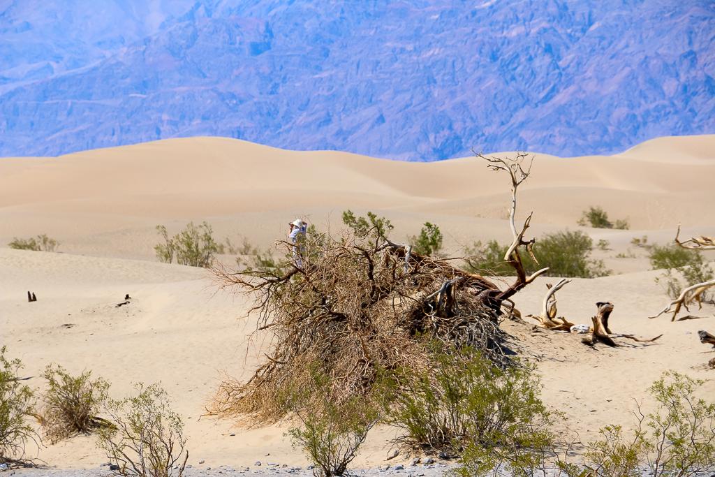 Death Valley: Mesquite Flat Sand Dunes Adventure - Roads and Destinations, roadsanddestinations.com