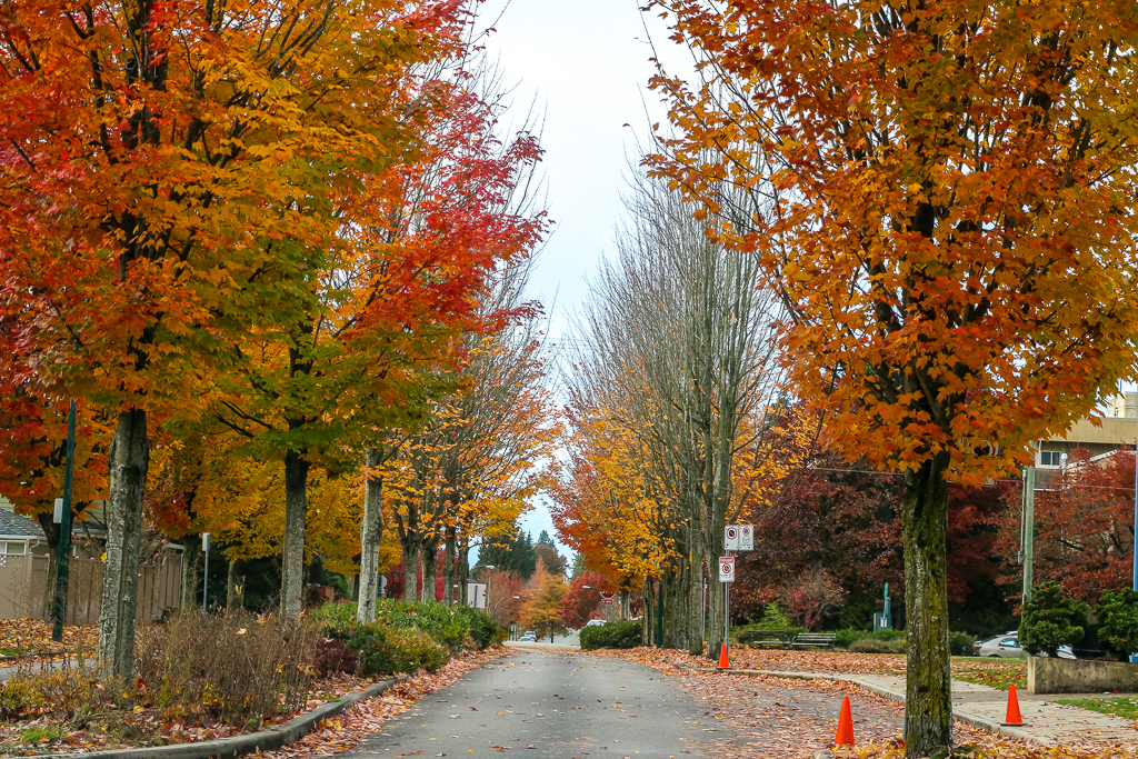 Suburbs of Vancouver in Fall