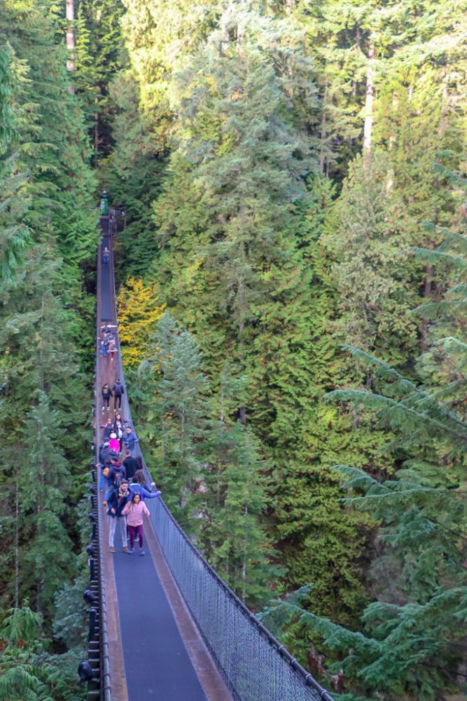 The Capilano Suspension Bridge Gets Busy Very Fast