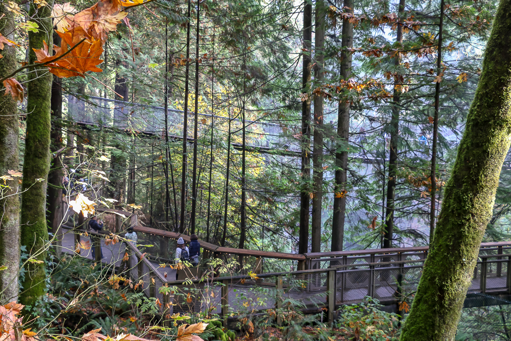 Capilano Suspension Bridge - Roads and Destinations, roadsanddestinations.com