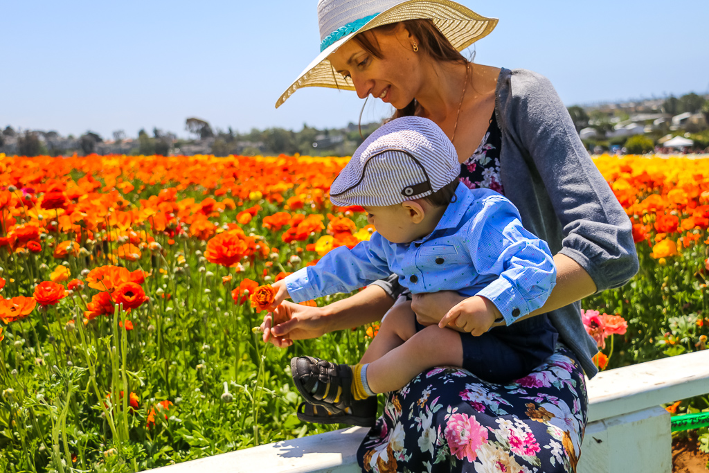 he Flower Fields in Carlsbad as a part of our traveling locally and abroad plan