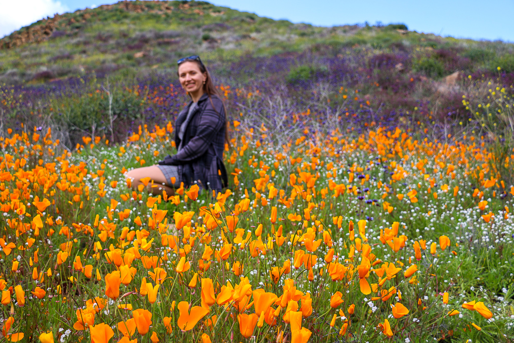 Where to see wildflowers near Los Angeles, roadsanddestinations.com