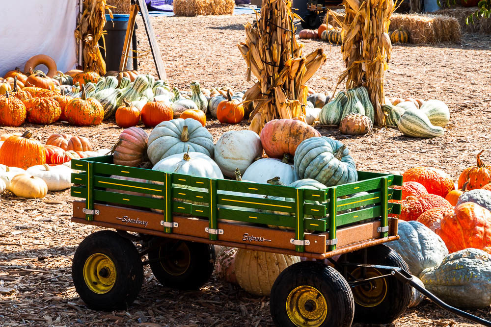 The prettiest pumpkin patches in Los Angeles - Roads and Destinations