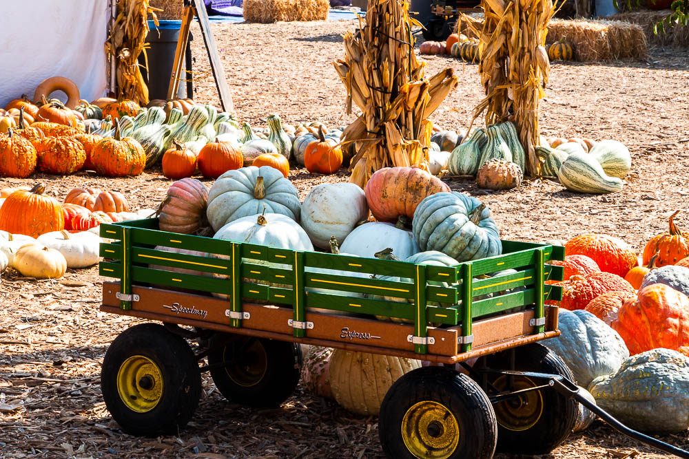 The prettiest pumpkin patches in Los Angeles, roadsanddestinations.com