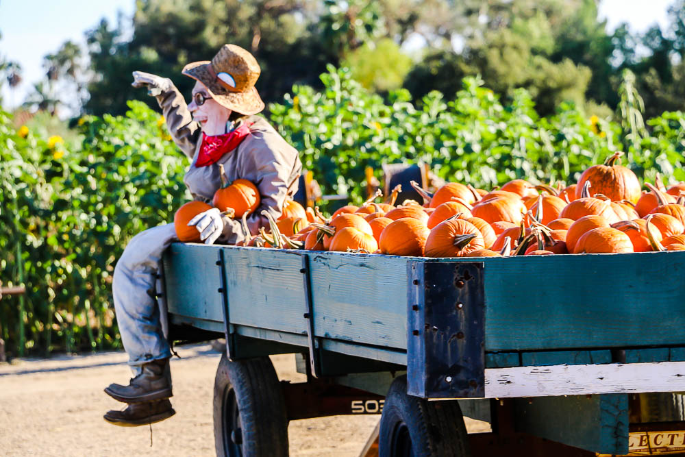 The prettiest pumpkin patches in Los Angeles. roadsanddestinations.com