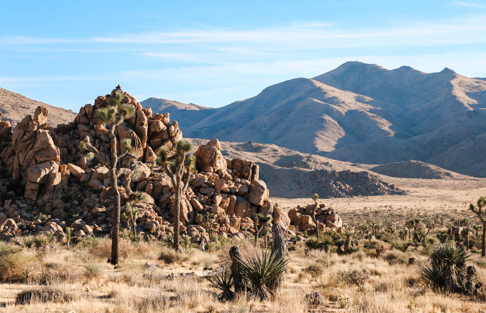 Things to Do in Joshua Tree National Park, www.roadsanddestinations.com