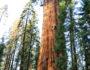 Visit Sequoia National Park, www.roadsanddestinations.com