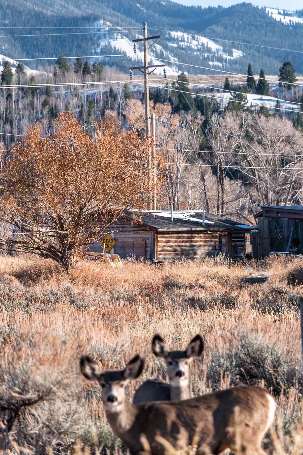 Photo Spots in Grand Teton - Roads and Destinations, roadsanddestinations.com