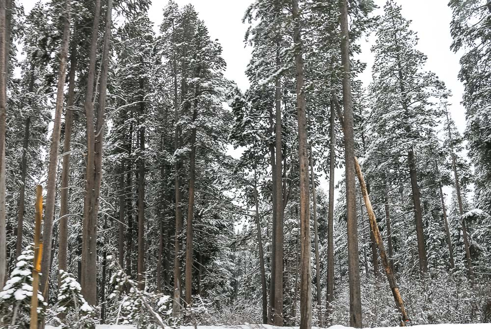 Places to find snow in California - Roads and Destinations___roadsanddestinations.com