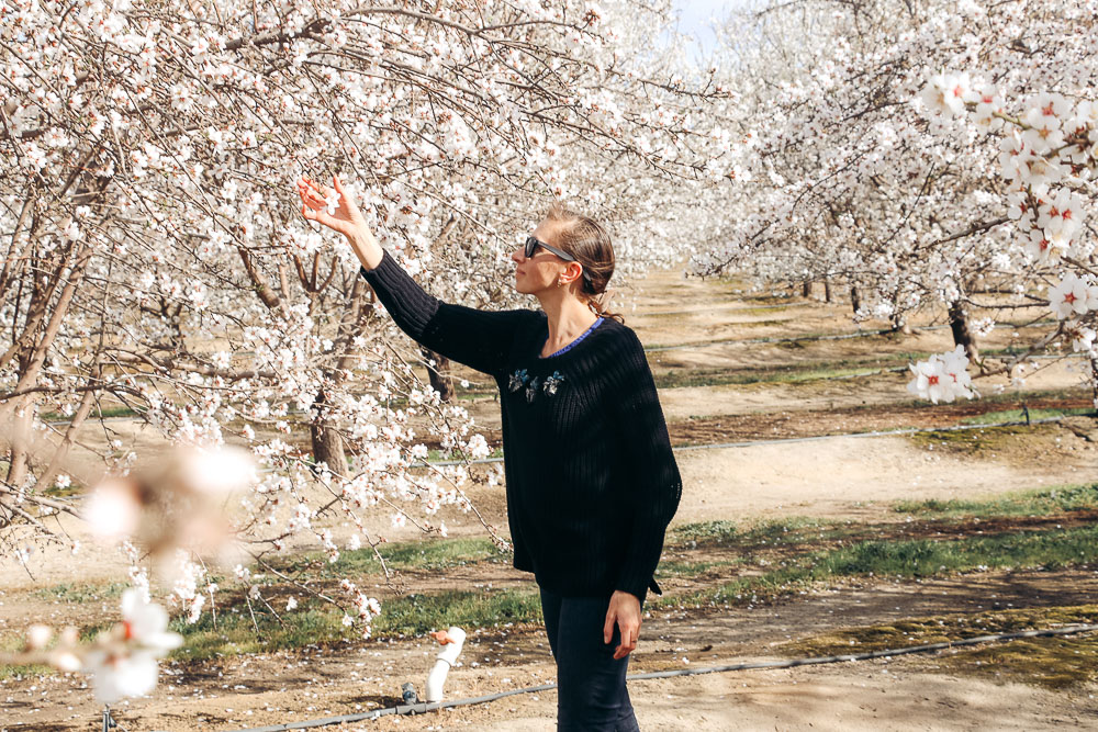Blooming Almond Orchards in California - Roads and Destinations