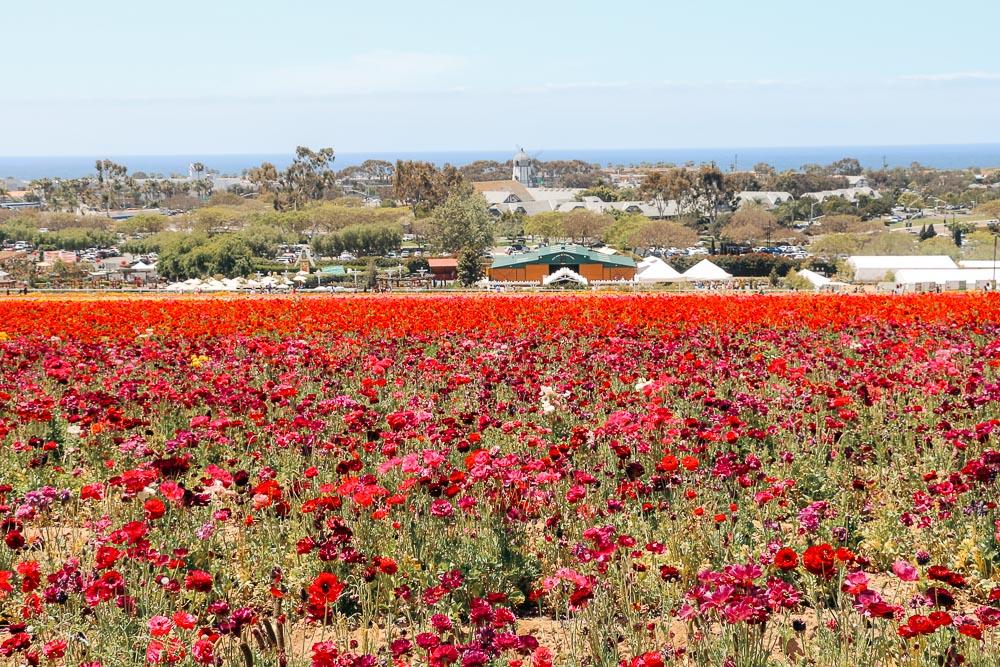 Visit Flower Fields - Roads and Destinations