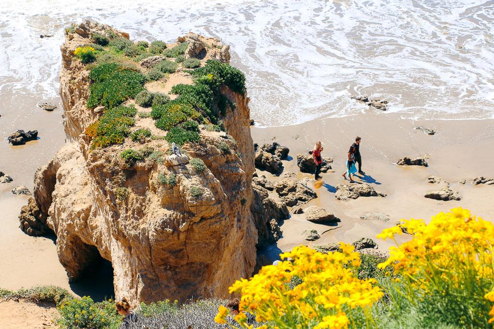 Wildflowers around El Matador Beach  -- Roads and Destinations