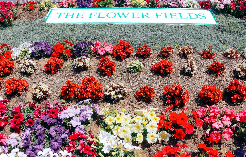 Visit Flower Fields in Carlsbad -- Roads and Destinations