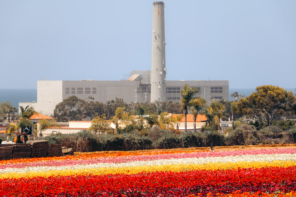 Visit Flower Fields in Carlsbad - Roads and Destinations