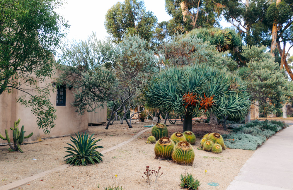 Cactus Garden - Roads and Destinations