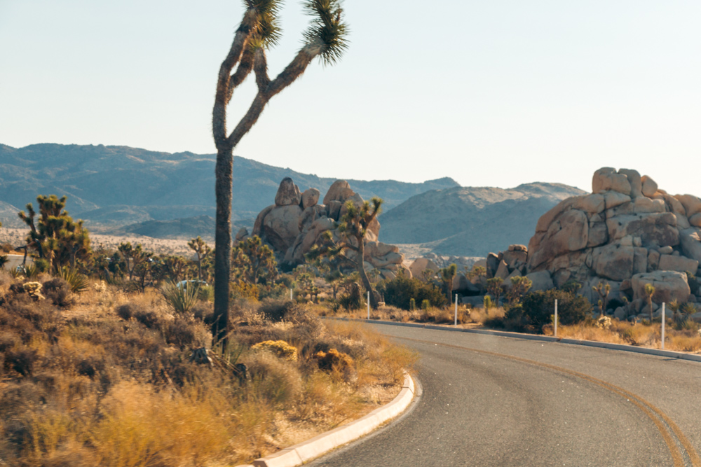 Visit Joshua Tree National Park. Top   Things to Do -  Roads and Destinations