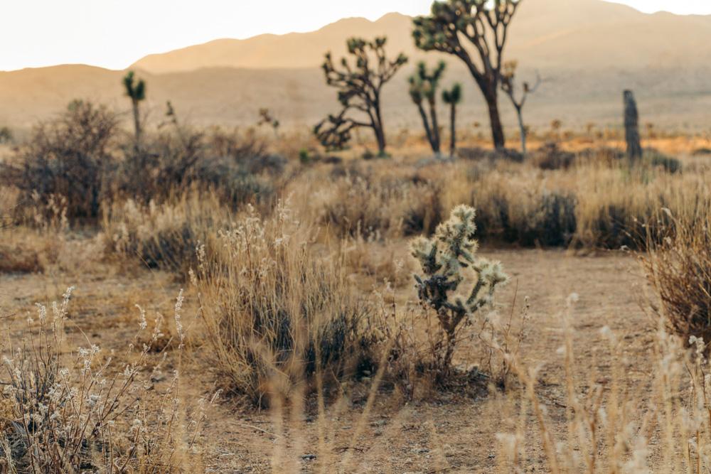 National Park, California - Roads and Destinations