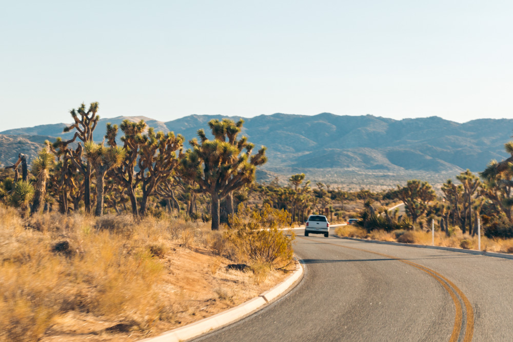 Weekend (1-2 Days) in Joshua Tree National Park - Roads and Destinations
