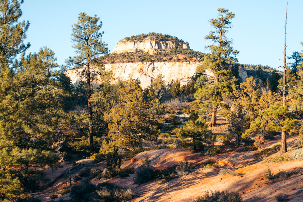 How to get around Zion National Park - Roads and Destinations.