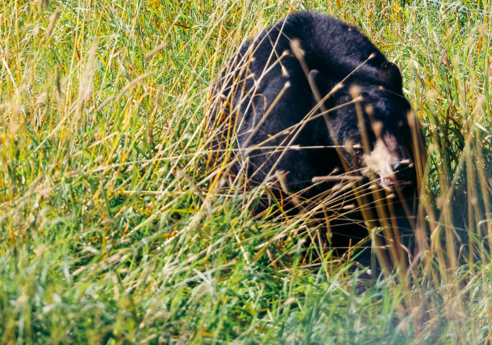 How to protect yourself from bears in the wild - Roads and Destinations