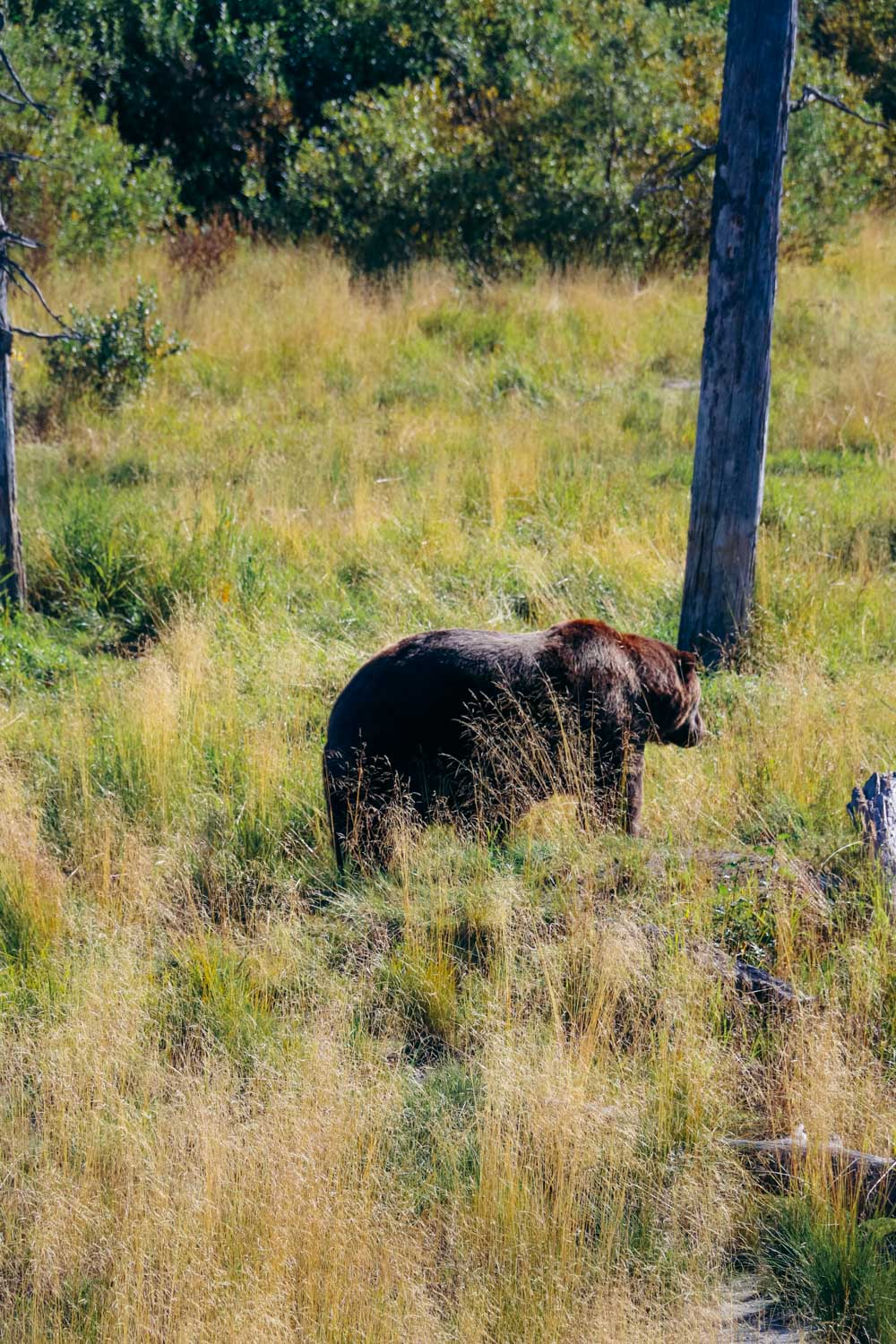 Bear safety in the wild - Roads and Destinations